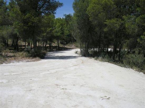 El Ayuntamiento repara caminos en espacios protegidos en la pedanía de Gebas, Foto 2